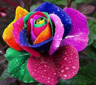 Обои на телефон розы, красочные
