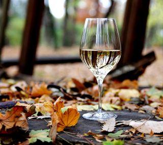 Обои на телефон осень, вино