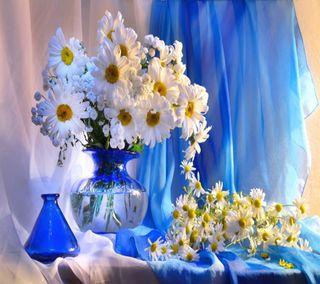 Обои на телефон маргаритка, цвести, весна, ваза