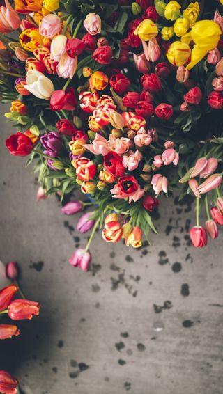 Обои на телефон тюльпаны, цветы, цветные