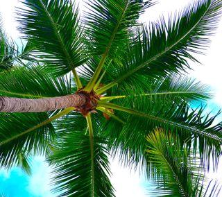 Обои на телефон пальмы, природа, на улице, лес, дерево, zarborday, earthporn