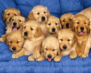 Обои на телефон pack of ten, собаки, тема