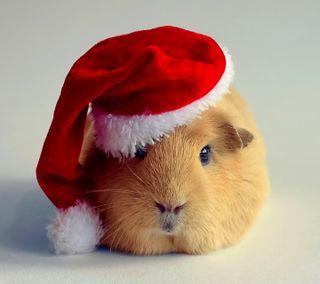 Обои на телефон свинья, санта, рождество, guinea