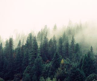 Обои на телефон сосна, дерево, природа, пейзаж, на улице, лес, zedgearday17, pine forest, arbor