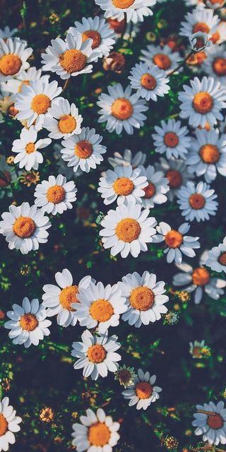 Обои на телефон простые, цветы, природа, любовь, flowers love nature