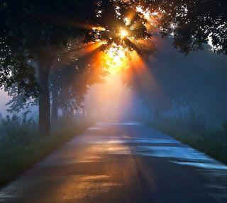 Обои на телефон восход, утро, природа, пейзаж, дорога, дерево