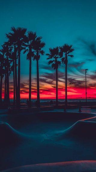 Обои на телефон тропические, рай, пальмы, деревья