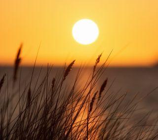 Обои на телефон трава, солнце, природа, закат, восход