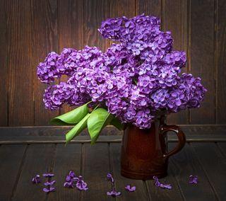 Обои на телефон природа, цветы, лепестки, сирень
