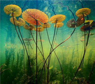 Обои на телефон цветы, рыба, рокки, розы, природа, новый, милые, любовь, лилии, крутые, вода, water lilies hd, love, 2012