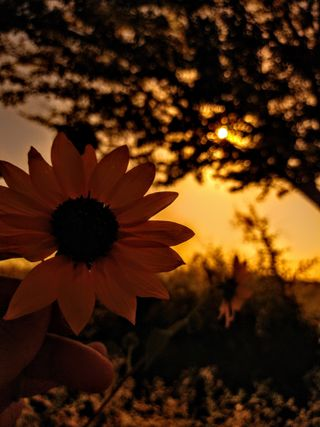 Обои на телефон цветы, темы, красота, винтаж