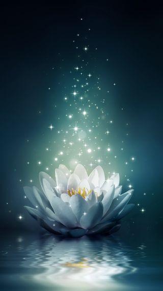 Обои на телефон лотус, цветы, темные, синие, приятные, лилии, вода, flower on water