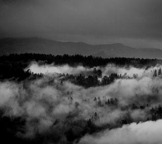 Обои на телефон туман, черные, фото, туманные, природа, пейзаж, облака, норвегия, лес, зерно, дерево, белые, voss, serene, hd, foggy woods
