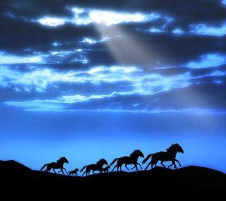 Обои на телефон лошадь, природа, лошади, бег