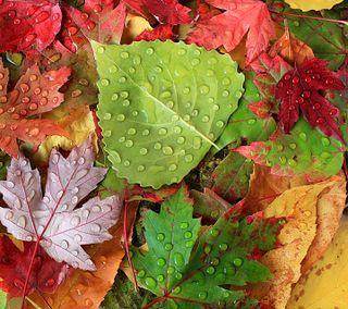 Обои на телефон осень, листья