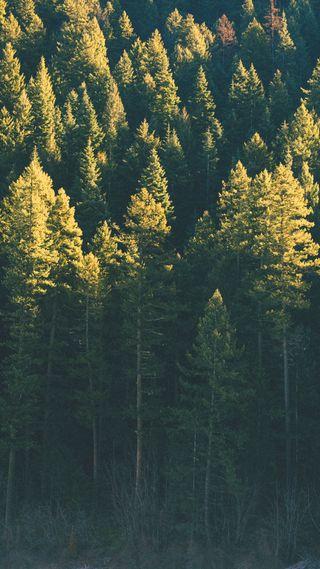 Обои на телефон природа, лес, дерево