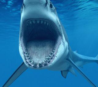 Обои на телефон акула, океан