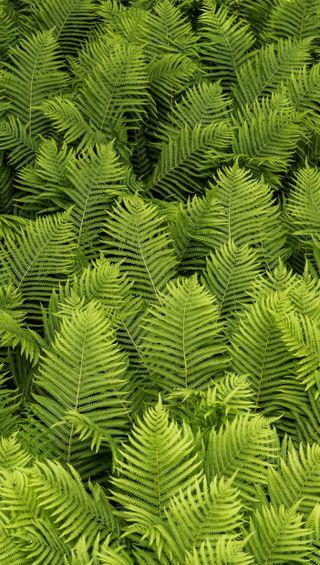 Обои на телефон яркие, простые, природа, красочные, зеленые, lush, greenery, ferns