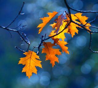 Обои на телефон яркие, синие, светящиеся, оранжевые, листья, красочные, дерево, ветка, боке, the leaves