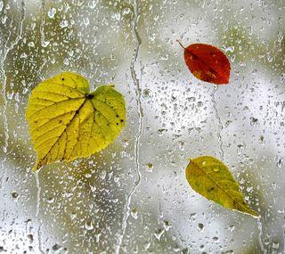 Обои на телефон осень, листья, капли, windows