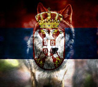 Обои на телефон волк, serbiawolf, serbia