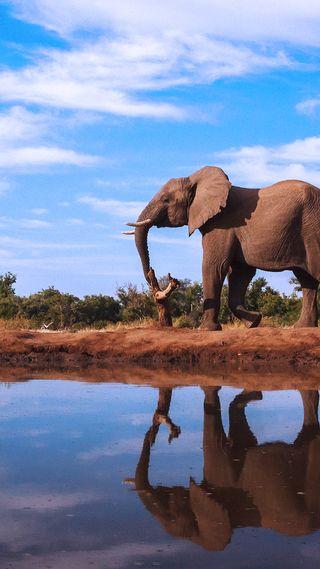 Обои на телефон слон, природа, отражение, вода