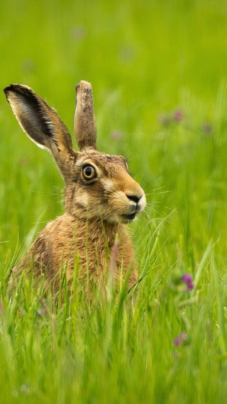 Обои на телефон кролики, кролик, животные, hare