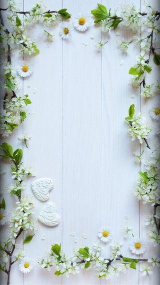 Обои на телефон love, любовь, природа, цветы, белые, сердце, дерево, цветочные, маргаритка