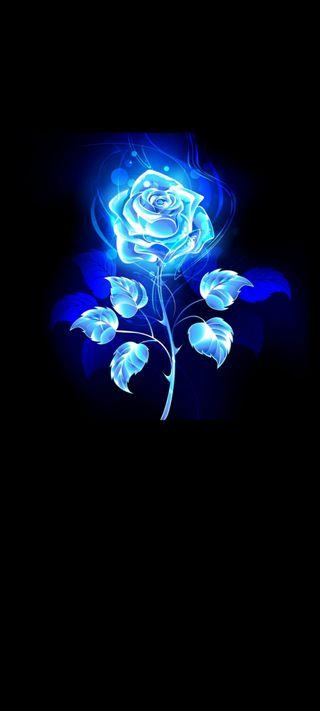 Обои на телефон цветы, ультра, синие, самсунг, розы, магия, линии, samsung, s20, blue line