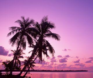 Обои на телефон розовые, пальмы, pink palms
