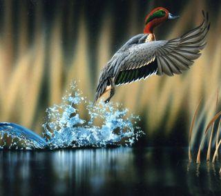 Обои на телефон летать, kingfisher, hd