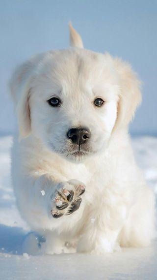 Обои на телефон щенки, собаки, cane cucciolo