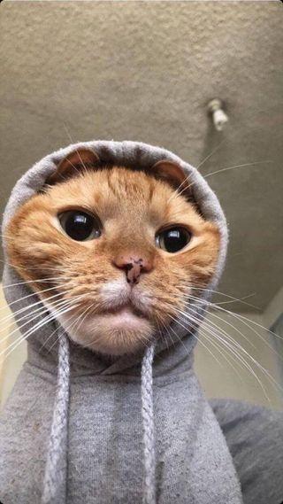 Обои на телефон кошки, котята, коты, кот