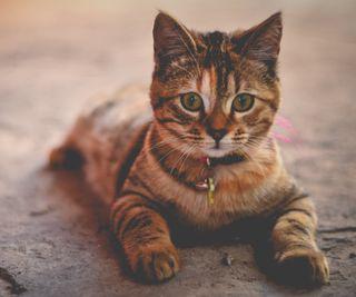 Обои на телефон котята, милые, кошки, восхитительные, zedgecute, cute tabby, aww