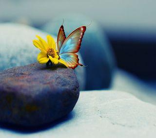 Обои на телефон маргаритка, симпатичные, желтые, бабочки, pretty butterfly