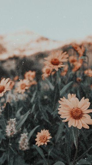 Обои на телефон мягкие, фотография, растения, природа, подсолнухи, персик, милые, арт, tumblr, tan, art