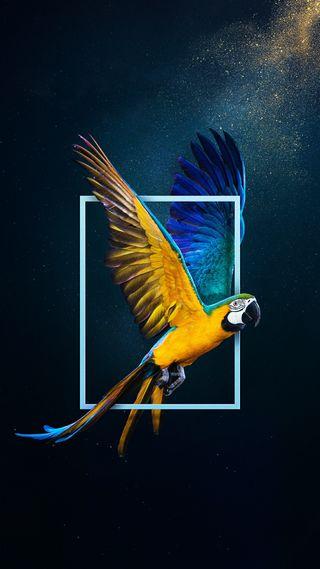 Обои на телефон amazing parrot, удивительные, птицы, попугай, попугаи