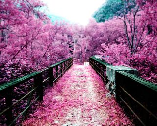 Обои на телефон вишня, цвести, упавший, сад, розовые, природа, парк, осень, мост, деревья, pink nature