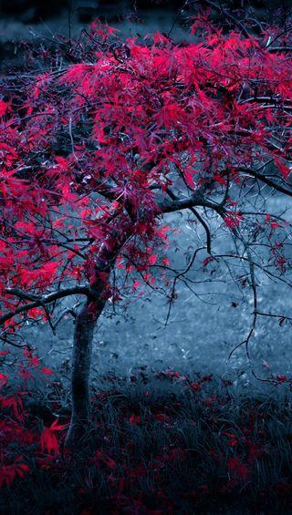 Обои на телефон холод, фиолетовые, дерево, абстрактные, dendron