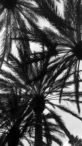 Обои на телефон черно белые, черные, деревья, дерево, белые, irvine, black and white tree