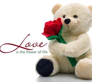 Обои на телефон ты, розы, медведь, любовь, день, 2160x1920px, love