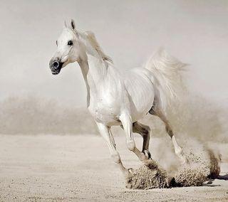Обои на телефон лошадь, белые