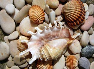 Обои на телефон раковина, пляж, песок, море, камни, sea shells