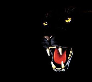 Обои на телефон черные, тигр, рык, питомцы, пантера, новый, любовь, лев, животные, глаза, love, black panther hd, 2012