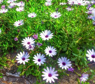 Обои на телефон маргаритка, цветы, солнце, розы, природа, пейзаж, море, листья, зеленые, hdr, hd