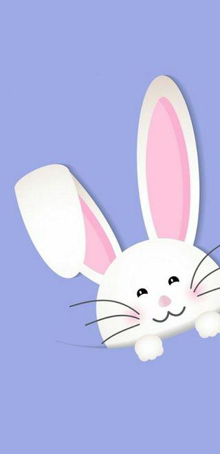 Обои на телефон кролики, пасхальные, кролик