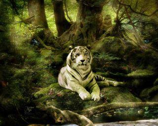 Обои на телефон тигры, джунгли, тигр, коты, животные, белые, white tigers, jungle white tiger