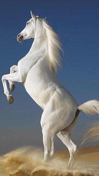 Обои на телефон лошади, животные, cavallo bianco
