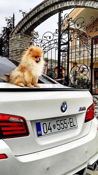 Обои на телефон м5, щенки, бу, бмв, белые, prizren, pomerian, kosovo, jiff, bubby, bmw