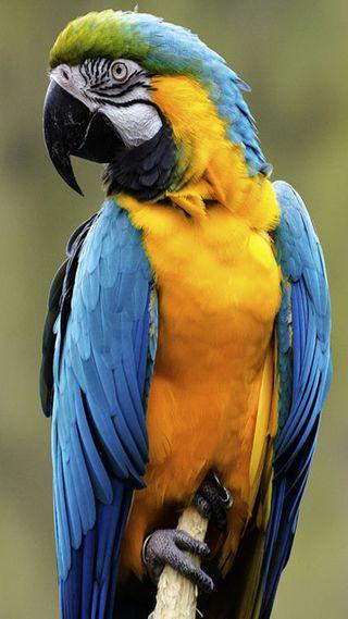 Обои на телефон попугай, желтые